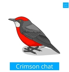 Crimson chat bird educational game vector image vector image