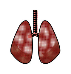 Drawing lung human organ healthy design vector