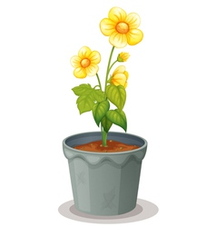 flower pot vector image vector image