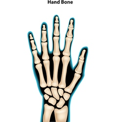 hand bone vector image vector image