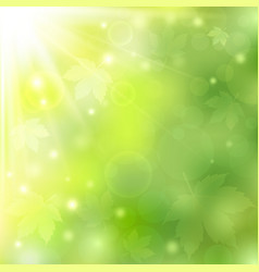 spring or summer sunny natural green background vector image vector image