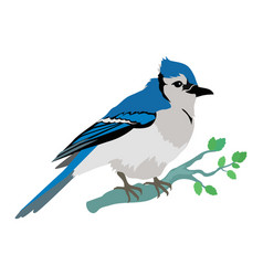 Blue jay flat design vector