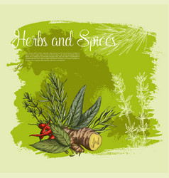 Spices and herbs seasonings poster vector