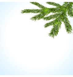 Green branches of a christmas tree on a white vector
