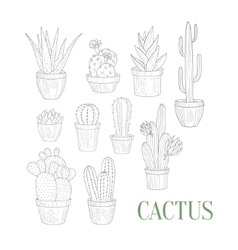 Different cacti in pots hand drawn realistic vector