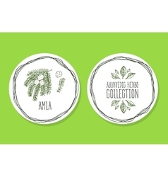 Ayurvedic herb - product label with amla vector