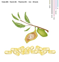 Chickpea with vitamin b9 b6 b1 and iron vector