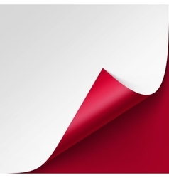 Curled corner of White paper on Red Background vector image vector image