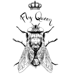 Fly insect with crown vector