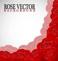 Rose corner background vector