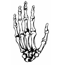 Hand drawn hand bones vector