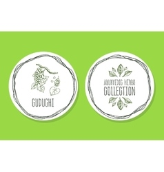 Ayurvedic herb - product label with guduchi vector