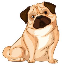 Little pug dog on white background vector