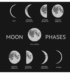 Phases of moon whole astronomy cycle vector