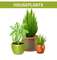 Realistic houseplants composition vector
