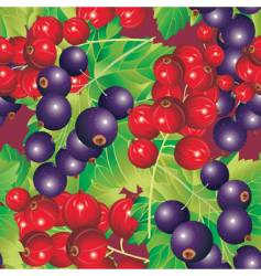 berry fruit background vector image vector image