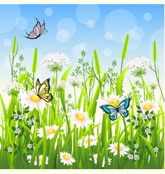 flower meadow in summer with butterfly vector image