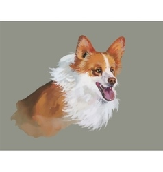 Welsh corgi pembroke animal dog watercolor vector