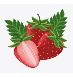 Strawberry fruit design vector