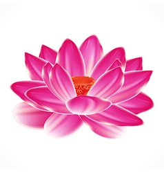 Water lily flower isolated element to your spa vector