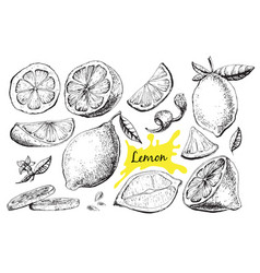 Hand drawn lime or lemon set vector