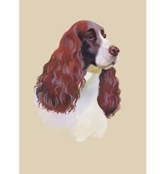 English cocker spaniel Animal dog watercolor vector image