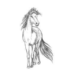 Horse standing with waving mane pencil sketch vector image vector image