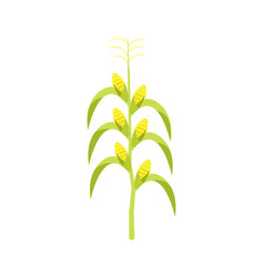 corn on stalk icon vector image vector image