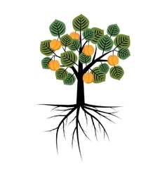 Decorative apricot tree vector image