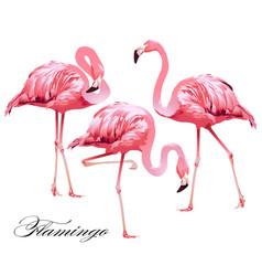 Print flamingos vector
