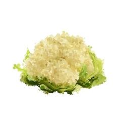 cauliflower of blots vector image vector image