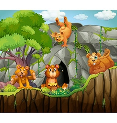 Four bears living in the cave vector image