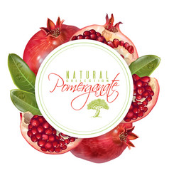 Pomegranate round banner vector
