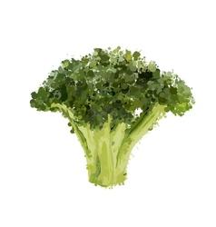 Broccoli head of blots vector image vector image