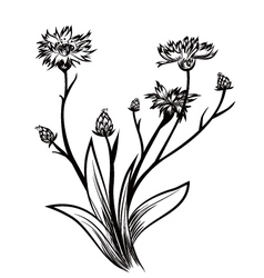 Cornflower vector image