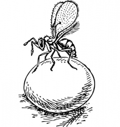 Stingless wasp trichogramma vector