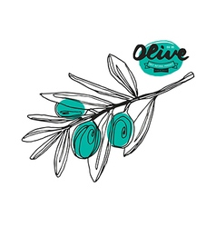 Stock of olive branch vector image