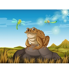Brown toad sitting on rock vector image