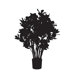 Office and house plant ficus silhouette vector
