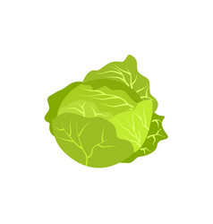 Head of cabbage icon vector