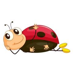 Cartoon ladybird vector