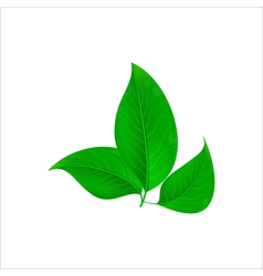 Realistic green leaves Ecology concept vector image vector image