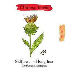 medicinal herbs of china safflower carthamus vector image vector image