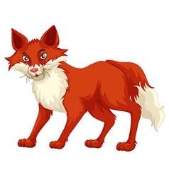 Fox with red fur standing vector image