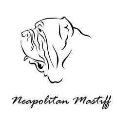 Neapolitan mastiff vector