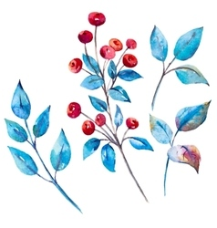 Watercolor berries vector image vector image
