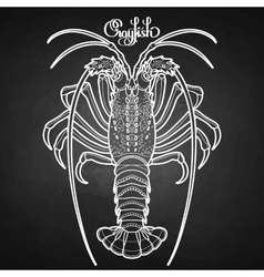 Graphic crayfish vector