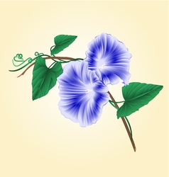Morning glory blue spring flower vintage vector