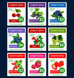 Berries and sweet garden fruits price cards vector