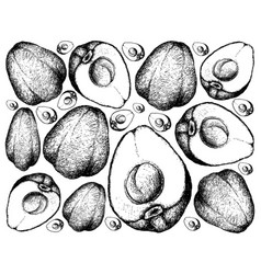 Hand drawn of pomerac or malay apple on white back vector